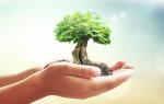 Imagem ilustrativa da notícia: Municípios realizam ações na Semana do Meio Ambiente